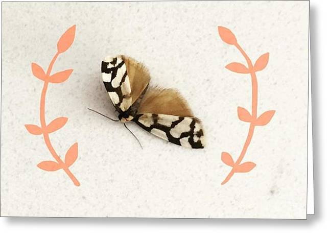I Found This Pretty Little Moth On My Greeting Card