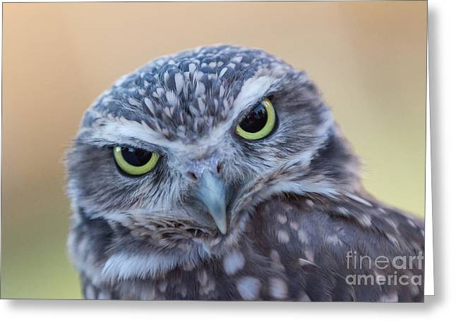 Greeting Card featuring the photograph I Give A Hoot by Chris Scroggins