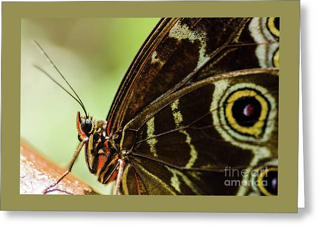 I Have My Eye On You Greeting Card by Nick Boren