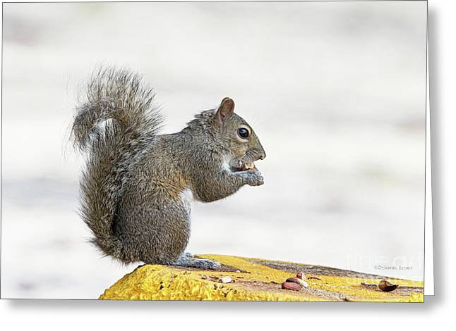Greeting Card featuring the photograph I Have My Nuts by Deborah Benoit
