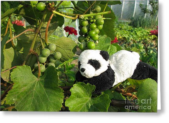 Greeting Card featuring the photograph I Love Grapes Says The Panda by Ausra Huntington nee Paulauskaite