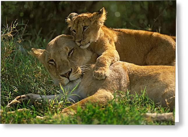 I Love My Mother Greeting Card by Johan Elzenga