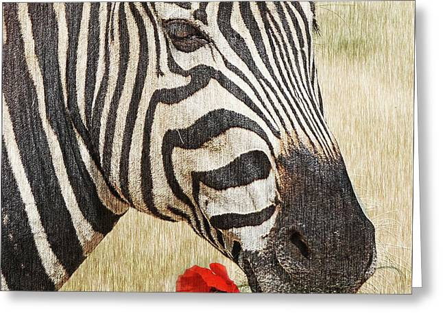 I Love Red Greeting Card by Barbara Dudzinska