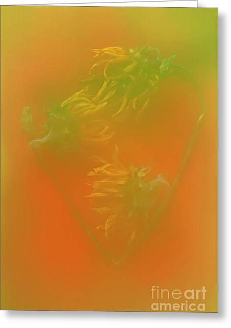 I Love Sunflowers. Greeting Card