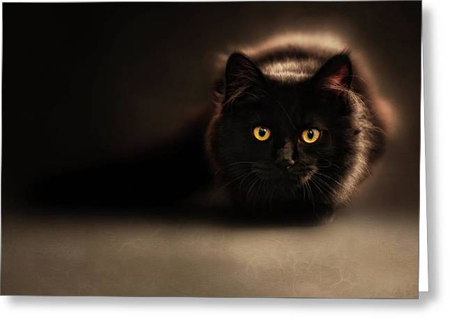 I Love To Pounce And Scratch Your Feet Cat Art Greeting Card by Georgiana Romanovna