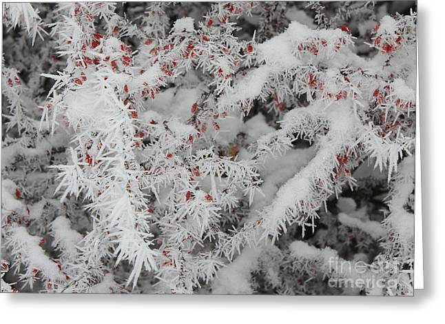 I Love Winter Greeting Card by Carol Groenen