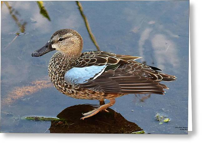 I Really Am A Green Winged Teal Greeting Card