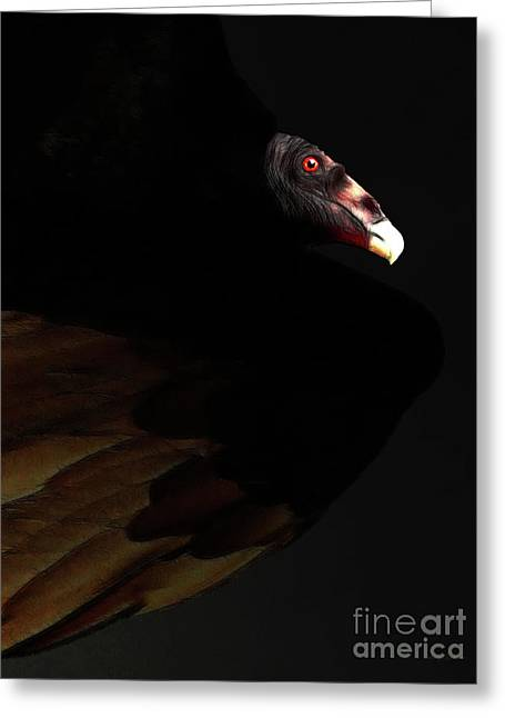 I Saw The Vulture In My Dreams Again Greeting Card