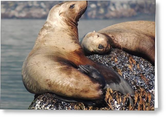 I Sea Lion Napping Greeting Card