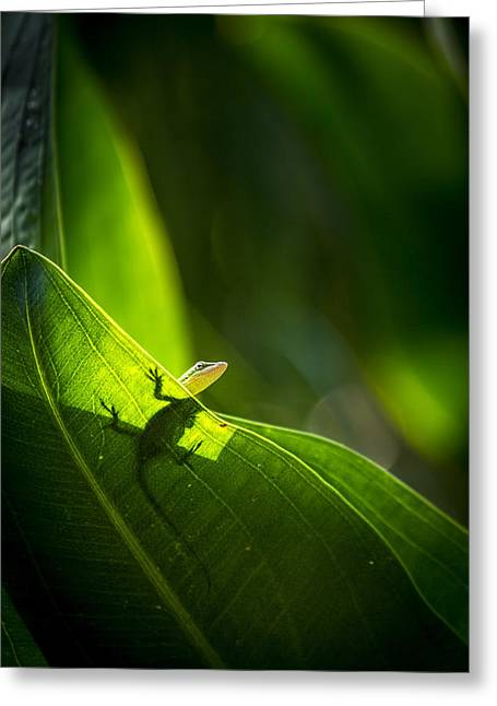 I See Green Greeting Card by Marvin Spates