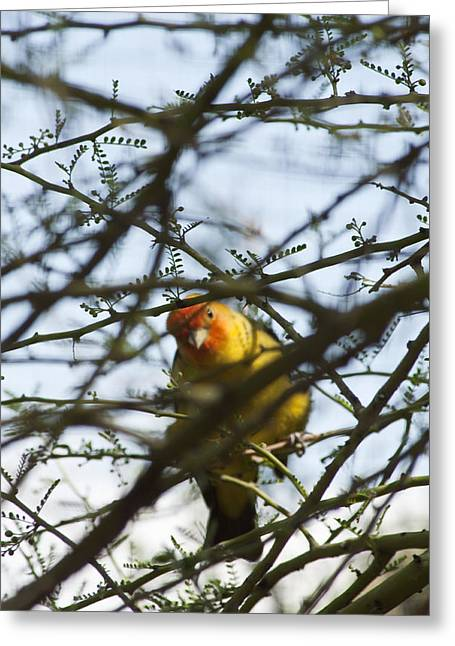 Greeting Card featuring the photograph I See You by Daniel Hebard