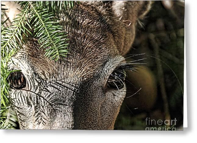I See You Ginkelmier Inspired Deer Greeting Card