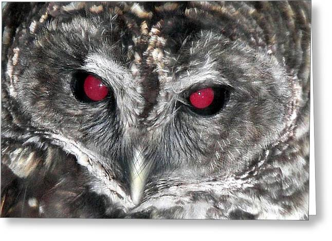 I See You Greeting Card by Karen Wiles