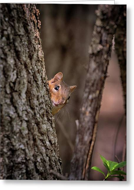 Greeting Card featuring the photograph I See You by Susan Rissi Tregoning