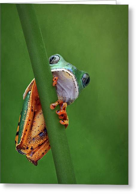 I See You - Tiger Leg Monkey Frog Greeting Card