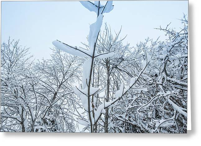 Greeting Card featuring the photograph I Stand Alone- by JD Mims