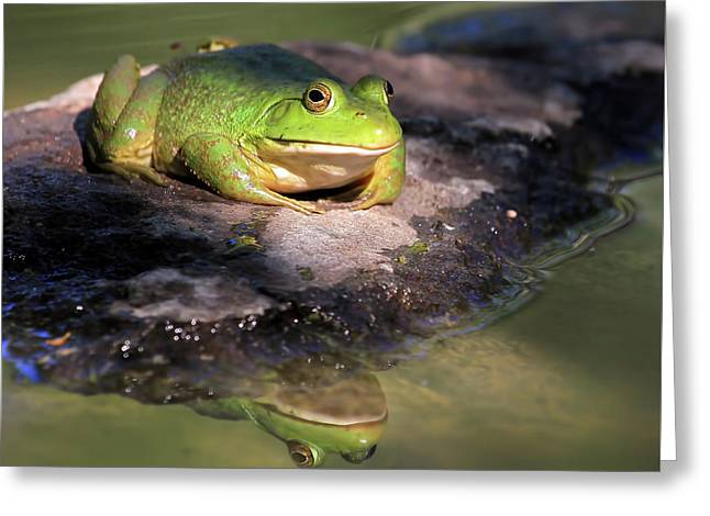 I Toad You So Greeting Card by Donna Kennedy