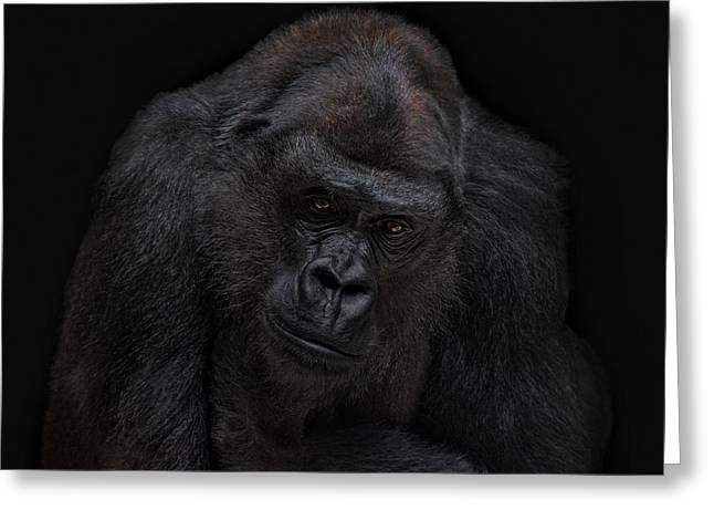 I Will Never Gonna Be A Silverback Greeting Card by Joachim G Pinkawa