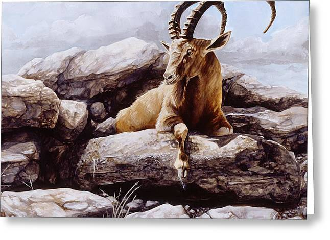 Ibex Greeting Card by Steve Goad