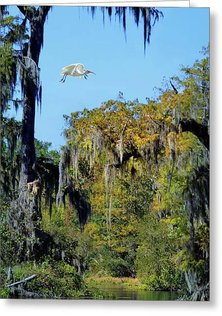 Ibis In Flight At Wakulla Springs Greeting Card