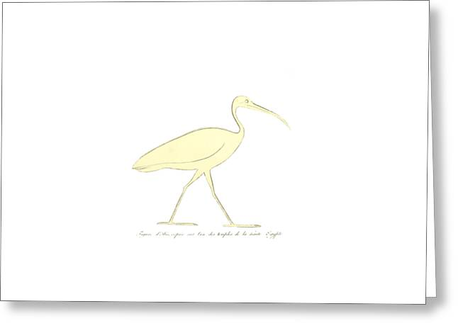 Ibis Greeting Card by Unknown
