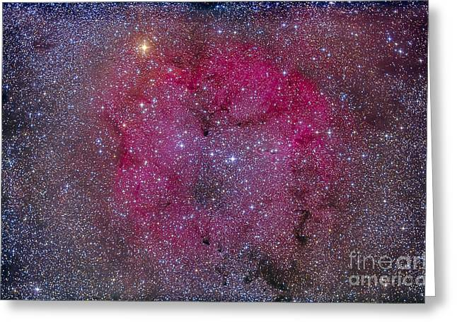 Ic 1396 And Garnet Star In Cepheus Greeting Card by Alan Dyer