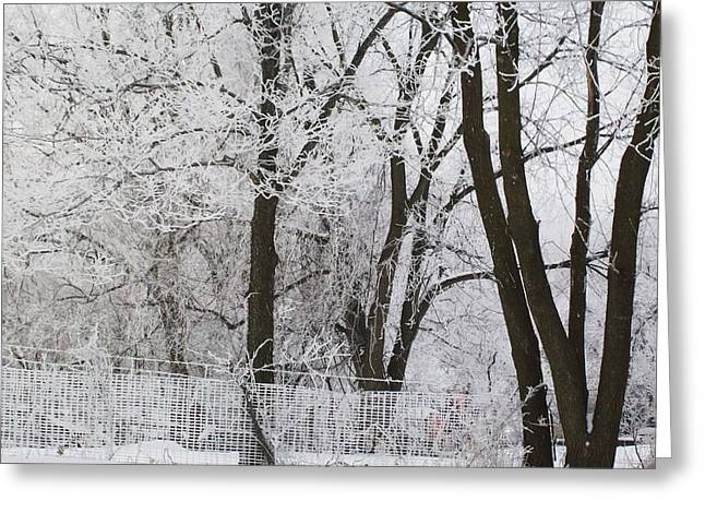 Ice Anyone Greeting Card by Marsha Heiken