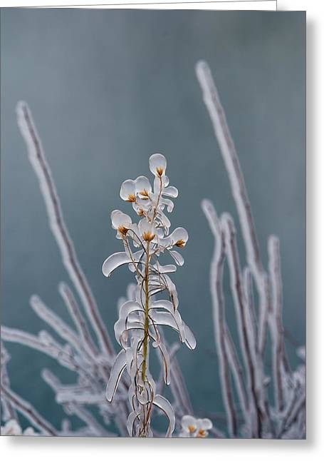 Image Setting Greeting Cards - Ice-coated Plants.  Mist From Shoshone Greeting Card by Darlyne A. Murawski