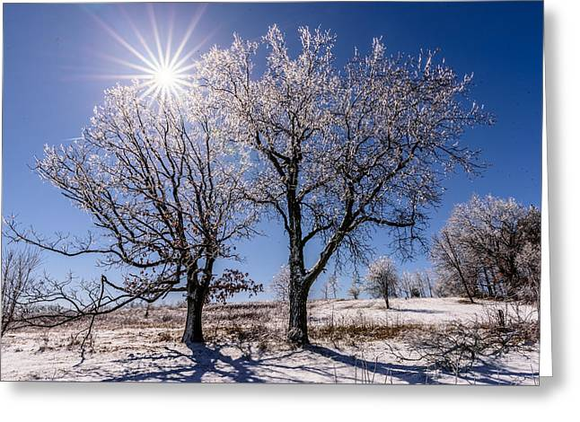 Ice Coated Trees Greeting Card by Randy Scherkenbach