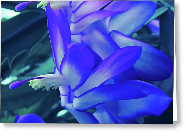 Greeting Card featuring the photograph Ice Cold Christmas Cactus Flower by Aimee L Maher Photography and Art Visit ALMGallerydotcom