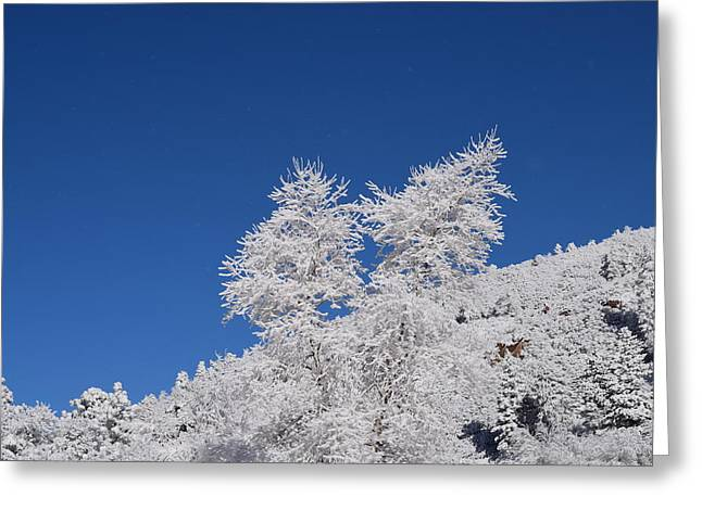 Ice Crystals Ute Pass Cos Co Greeting Card