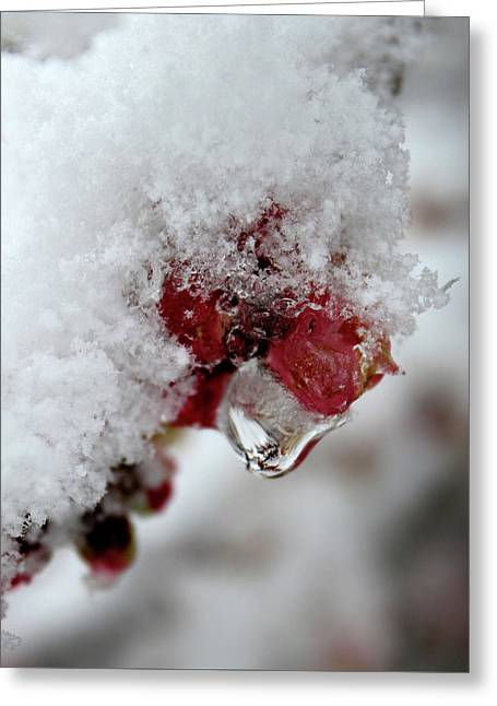Greeting Card featuring the photograph Ice Drip by Melinda Blackman