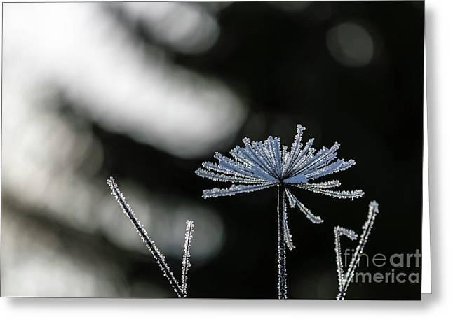 Ice Flower Greeting Card by Veikko Suikkanen
