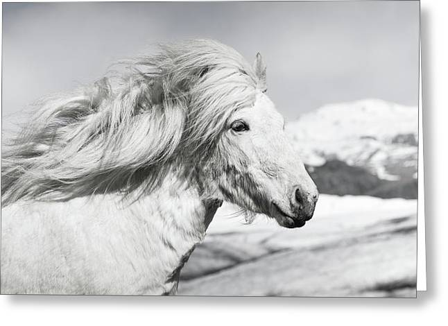 Ice Horse Greeting Card by Tim Booth