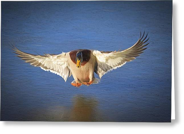 Ice Landing Greeting Card by Donna Kennedy