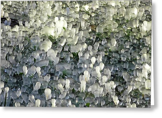 Ice On The Lawn Greeting Card