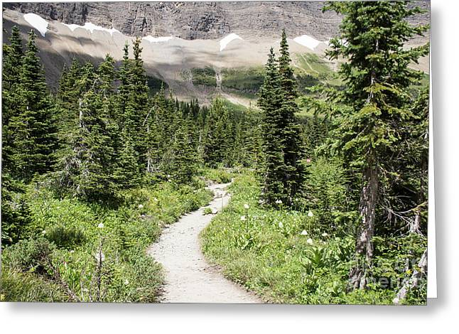 Iceberg Lake Trail Forest Greeting Card