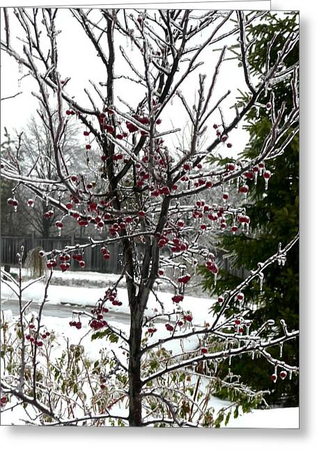 Iced Crab Apple Tree Greeting Card by Dmytro Toptygin