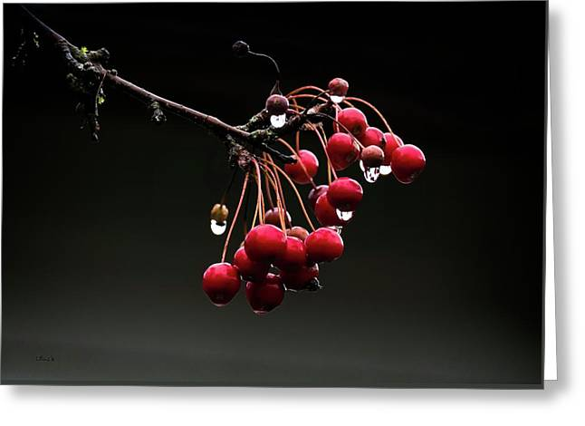 Iced Crab Apples Greeting Card