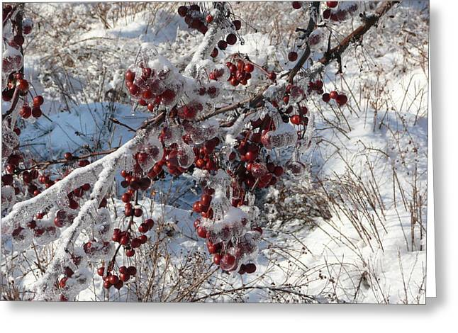 Iced Crab Apples Greeting Card by Dmytro Toptygin