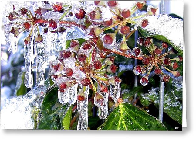 Iced Ivy Greeting Card