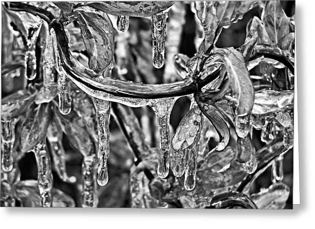 Iced Greeting Card by Karen Scovill