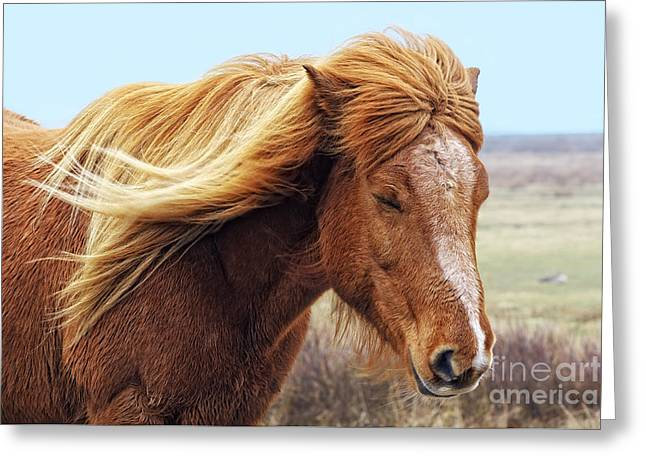 Iceland Horse In The Wind Greeting Card by Angela Doelling AD DESIGN Photo and PhotoArt