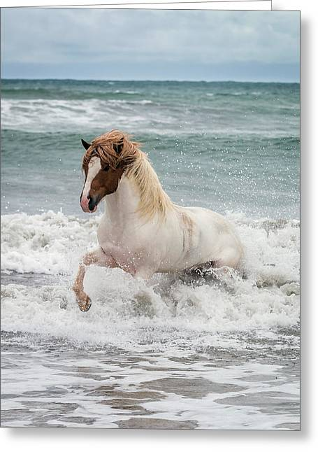 Icelandic Horse In The Sea, Longufjorur Greeting Card by Panoramic Images