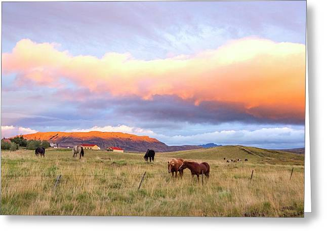 Greeting Card featuring the photograph Icelandic Horses Under The Sunset by Brad Scott