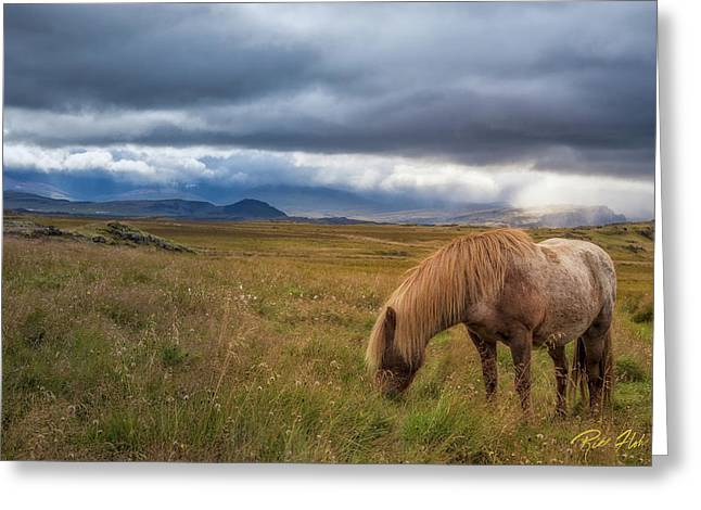 Greeting Card featuring the photograph Icelandic Pastoral With Iconic Horse by Rikk Flohr