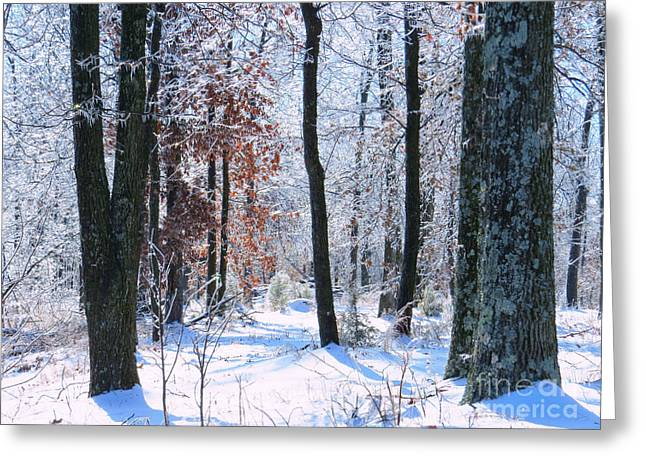 Icey Forest 1 Greeting Card