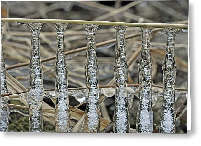 Greeting Card featuring the photograph Icicles On A Stick by Glenn Gordon