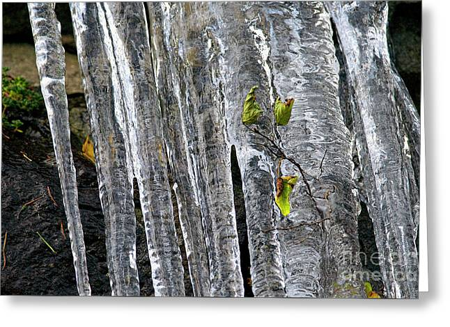 Greeting Card featuring the photograph Icicles by Sharon Talson