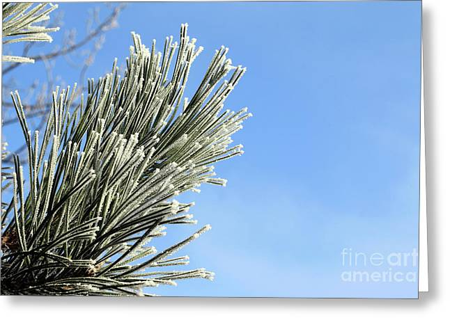 Greeting Card featuring the photograph Icing On The Needles by Michal Boubin